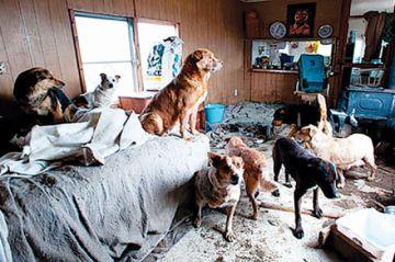 Brigadas encuentran que en un  domicilio viven hasta 26 perros