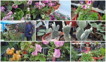 Feria de flores y plantas de altura termina mañana
