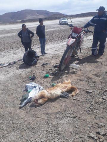Tres orureños fueron detenidos por caza furtiva de vicuñas