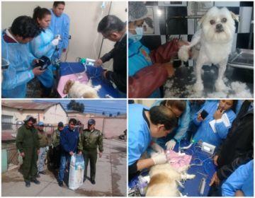 Los veterinarios celebran su día