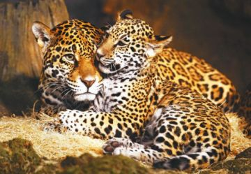 Acuerdan acciones contra la venta ilegal de vida silvestre