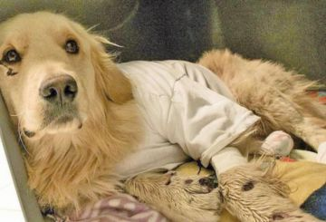Conductor que arrastró a su perro por 3 kilómetros se salva de ir a la cárcel
