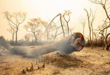 El incendio forestal rebrota en la Chiquitania por nuevos chaqueos