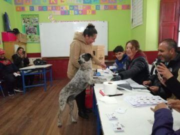"""""""El perrito que quería votar"""" se convierte en sensación en las redes"""