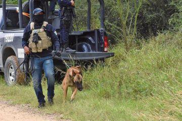 Hallan fosa con restos de tres personas en México