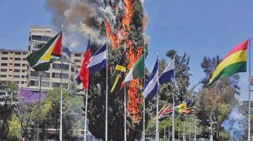 Incendian uno de los emblemáticos pinos en la Plaza de las Banderas