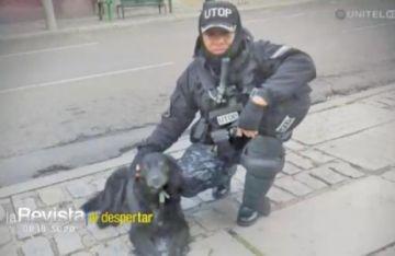 Muere el can y compañero del fallecido comandante Antelo