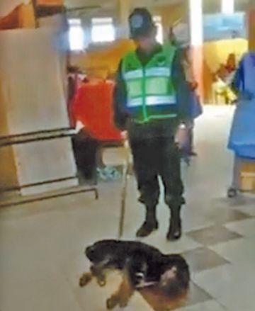Perro ahorcado fue torturado  antes de morir