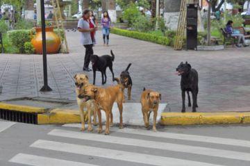 Sedes registra 3 mordeduras de perros contra personas por día