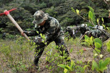 El 20 de enero inician la erradicación en el Chapare, Cochabamba