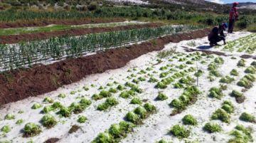 El granizo causa daños en las comunidades potosinas