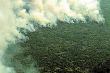 Crece la deforestación en la Amazonía