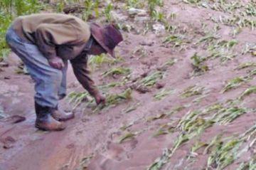 Lluvias y granizo causan fuerte daño en comunidades potosinas