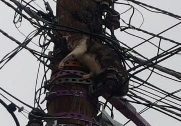 Un gato está atrapado en el cableado eléctrico