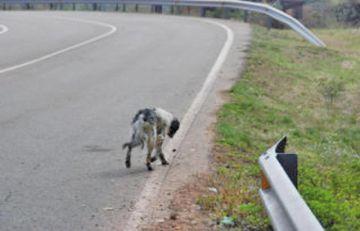 Piden una ley para sancionar abandono de canes en vías