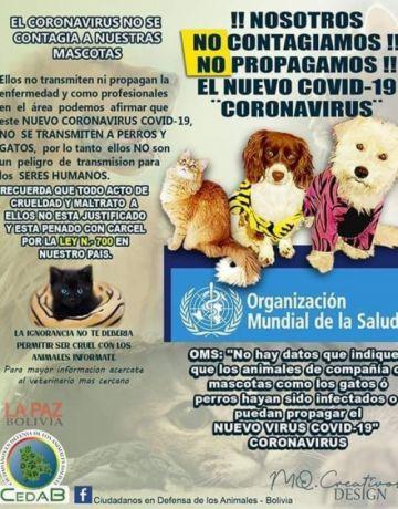 Piden permiso para atender a las mascotas enfermas durante la cuarentena