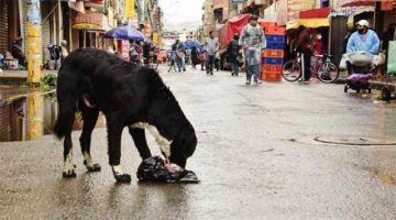 Refugios, aves y canes callejeros sufren sin alimento y dependen de la solidaridad