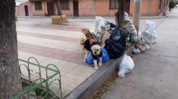 La ciudad de los perros