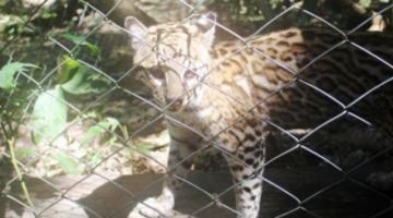 Mediante donaciones garantizan alimentos para centros de acogida de animales silvestres