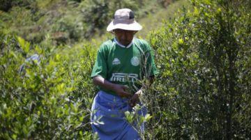 La cuarentena paraliza la destrucción de cultivos ilegales de coca en Bolivia