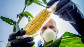 Áñez autoriza pruebas de bioseguridad para cinco cultivos transgénicos