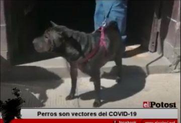 Los perros son vectores del COVID-19