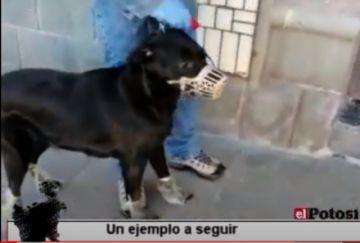Conozca a Diana, una perrita, sale con bioseguridad al veterinario
