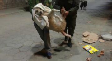 Gacip socorre a un perrito atravesado por reja de jardinera