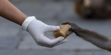 PETA pide el cierre de los mercados de animales en Asia ante peligro de virus