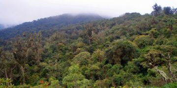 Gobierno prohíbe ingreso de turistas a áreas protegidas por la cuarentena