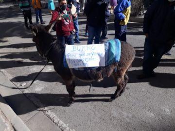 El porqué del burrito en protesta vecinal para pedir la renuncia de concejales