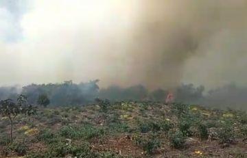Incendio consume cultivos agrícolas y vegetación tropical en Cochabamba