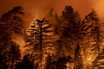 """Trump advierte que árboles caídos """"explotan"""" con incendios forestales"""