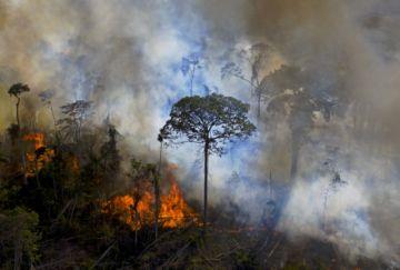 """Bolsonaro denuncia en la ONU """"brutal campaña de desinformación"""" sobre la Amazonía"""