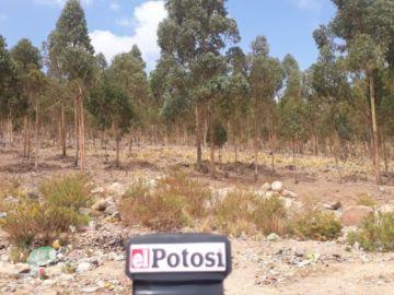 ¿Cementerio jardín en Potosí? Realizan inspección al terreno