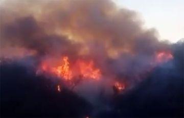 Chuquisaca: Incendio consume ricas especies de madera