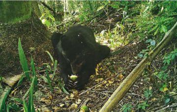 El fuego acecha a los osos jucumari de El Palmar en  Chuquisaca