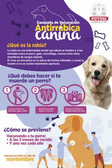 Campaña de vacunación contra la rabia inicia el 3 de noviembre