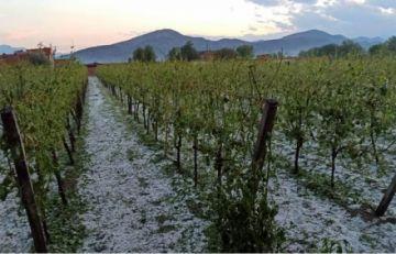 Tormenta de granizo causa pérdida de cultivos en Tarija