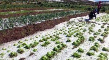 Comunarios cuentan cómo el granizo destrozó su producción en Puna