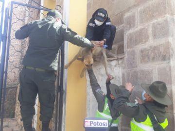 Rescatan a perrito de un muro de la Catedral