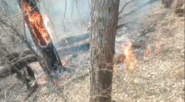Alertan que ceniza de incendios contamina el agua de la zona de Macharetí