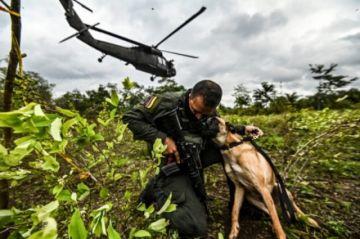 Colombia dice haber batido récord de erradicación de narcocultivos por segundo año consecutivo