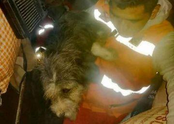 Sucre: Rescatan a un perro atascado en una caseta del mercado Campesino