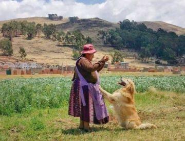 """Conoce a """"Yoshiro"""" el condecorado can antidroga que disfruta su jubilación a orillas del lago Titicaca"""
