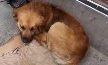 La Paz: Fallece el hombre que fue encontrado agonizando junto a su perro