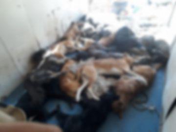 Filtran fotos de  perros muertos