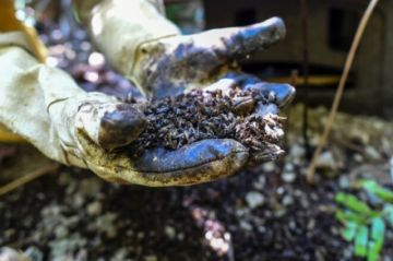 Un agrotóxico vetado en Europa aniquila a las abejas en Colombia