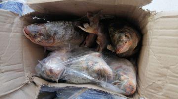 Llega Semana Santa, comienzan decomisos de pescado pese a reclamo de comerciantes