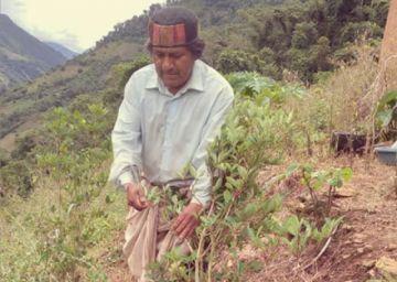"""Exsenador del MAS dice que una """"DEA Chapareña"""" hostiga a Yungas"""